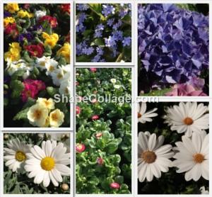Collage voorjaar